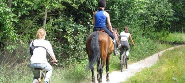 Überholen eines Pferds von Fahrrad