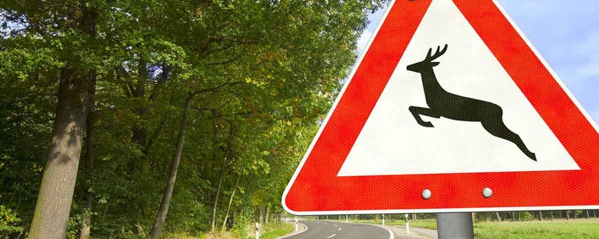 Wildwechsel Straßenschild