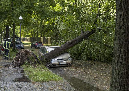 Schäden durch Bäume
